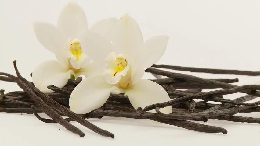 Vanilla Herb with Flowers Isolated Stock Footage Video (100% Royalty-free) 654490   Shutterstock