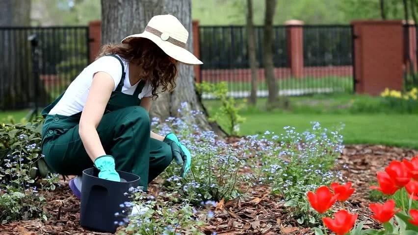 Woman Working in Garden Stock Footage Video (100% Royalty-free) 6756187 |  Shutterstock