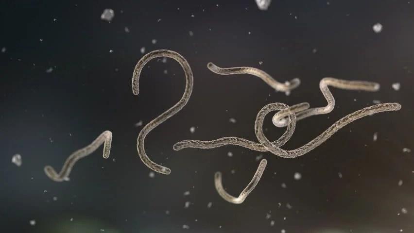 Image result for ebola virus - HD images