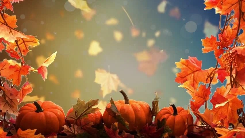 Fall Pumpkin Wallpaper Hd Happy Thanksgiving Background Loop Stock Footage Video