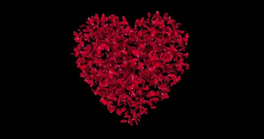 Falling Rose Petals Wallpaper Heart Of Rose Petals Exploding Stock Footage Video 1957084