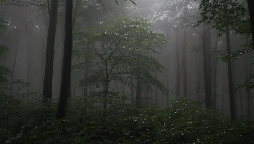 Fall Mist Wallpaper Foggy Forest With Rain Drops Sound Stock Footage Video