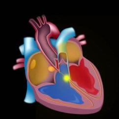 Cardiac Arteries Diagram 2005 Ford Escape Serpentine Belt Slow Motion Of Blood Flow In The Heart, Seamless Loop Stock Footage Video 1227049 | Shutterstock