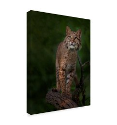 shop galloimages online bobcat poses on tree branch 1 canvas art multi color free shipping today overstock 21814289 [ 2000 x 2000 Pixel ]