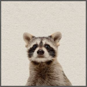 'Shocked Raccoon' Floater Framed Painting Print on Canvas - Multi-color