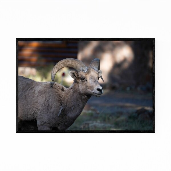 noir gallery bighorn sheep