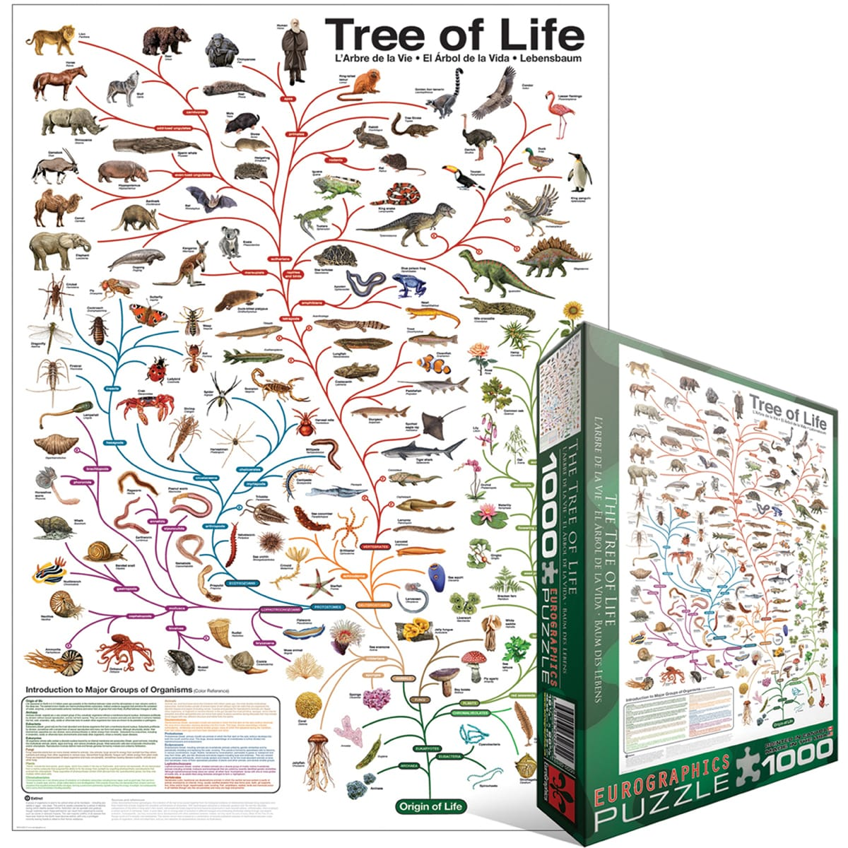 Shop Jigsaw Puzzle Pieces Evolution