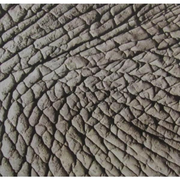 Shop African Elephant Skin Modern Ceramic Wall Tile Pack