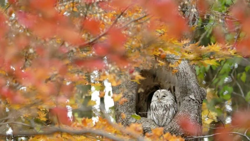 Cute Fall Owls Hd Wallpaper Forest Of Autumn Leaves And Owl 2b 2015 On October 27