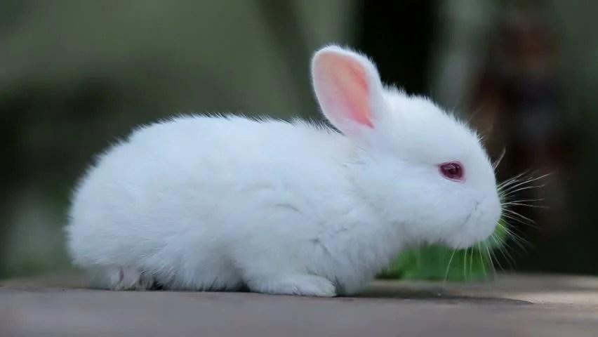 Cute Rabbit Wallpaper Little White Bunny Rabbit On Green Grass White Rabbit