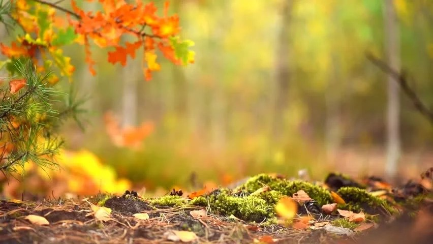 Falling Feathers Wallpaper Autumn Sunny Forest Background Park Stock Footage Video