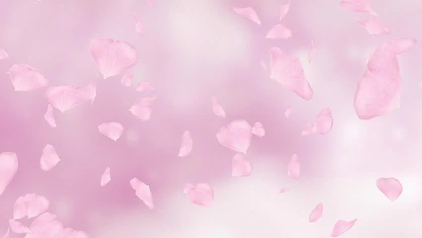 Rose Petals Falling Wallpaper Stock Video Footage 4k And Hd Video Clips Shutterstock
