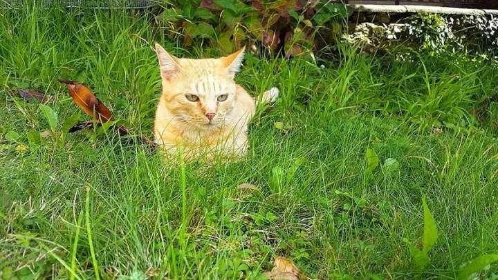 kucing lucu haftron.com