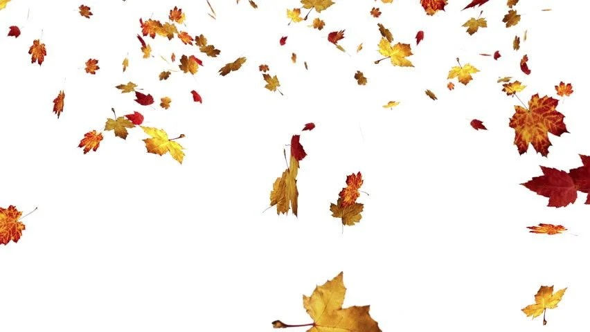 Fall Leaves Clip Art Wallpaper Falling Leaves On White Background Stock Footage Video