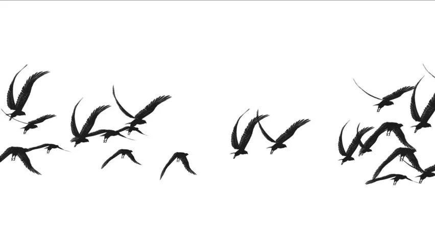 4k Flock of Pigeons Birds Stock Footage Video (100%