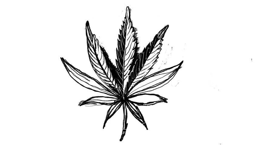 Timelapse Video Drawing of Marijuana Stock Footage Video