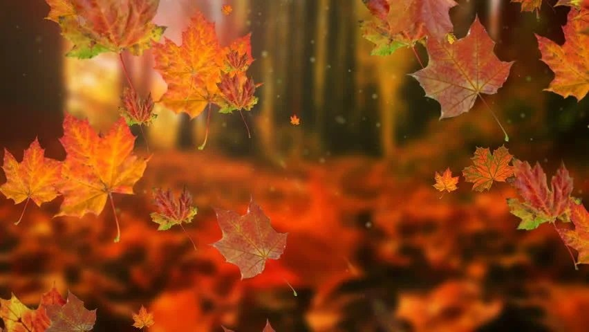 Falling Leaves Animated Wallpaper Autumn Leaves Falling In Slow Stock Footage Video 100