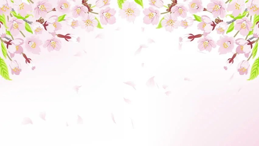 Drop Of Water Falling From A Leaf Wallpaper Animation Of Falling Petals Of Sakura With Flowers Sakura