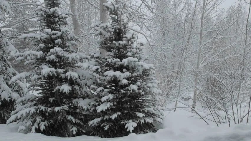 Christmas Snow Falling Wallpaper Time Lapse Of Snow Falling Stock Footage Video 100