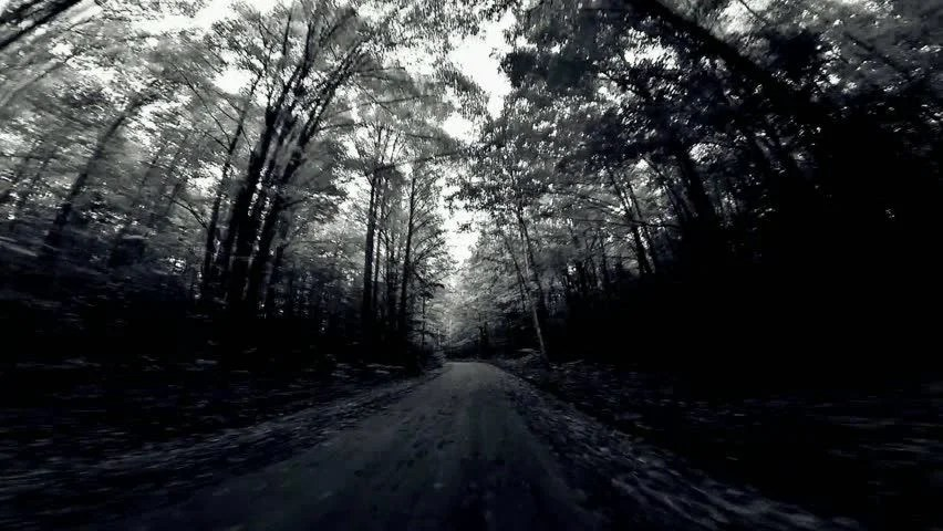 Black And White Tree Trunk Wallpaper Scary Black And White Forest Seamless Loop Stock Footage