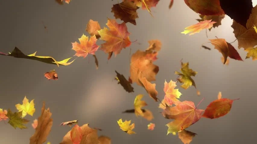Free Animated Falling Leaves Wallpaper Falling Leaf Loopable Background High Quality Animated