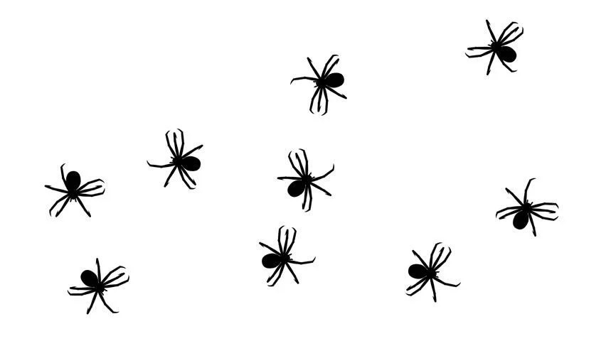 Swarm of Spiders, Cg Animated Stock Footage Video (100%