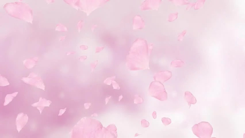 Falling Cherry Blossom Wallpaper Hd Falling And Swirling Pink Rose Petals Or Cherry Tree