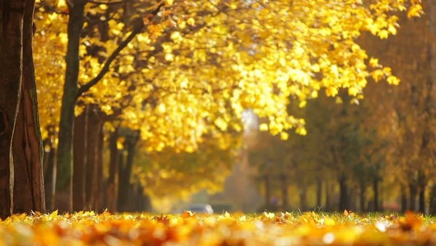 Fall Foliage Wallpaper Hd Autumn City Park On A Sunny Day Stock Footage Video