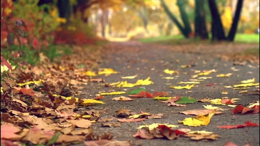 Wallpaper For Fall And Autumn Fall Foliage Colors On The Trees And Ground Image Free