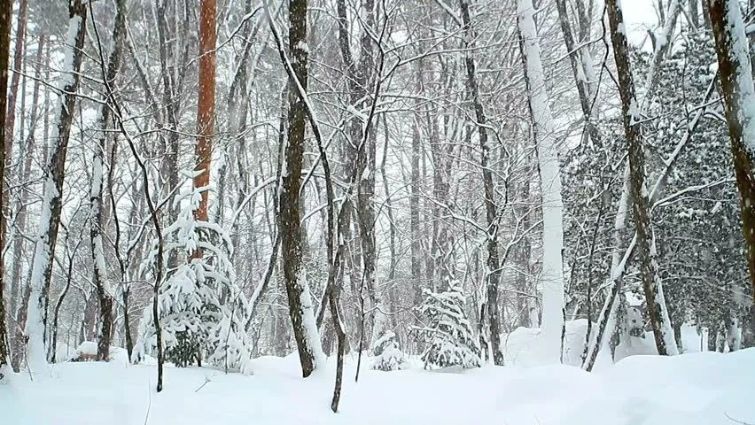 Wallpaper Falling Snow Snowy Forest Landscape With Snow Falling Image Free