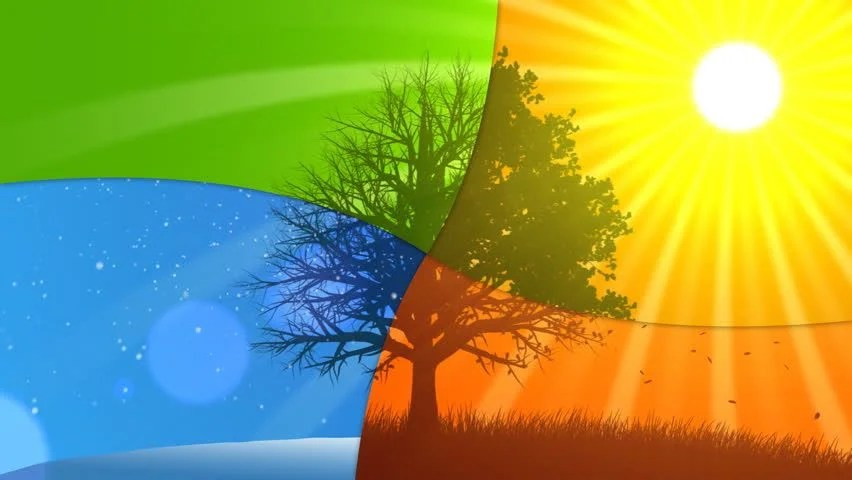 Autumn Tree Leaf Fall Animated Wallpaper 4 Seasons Summer Animated Background Stock Footage