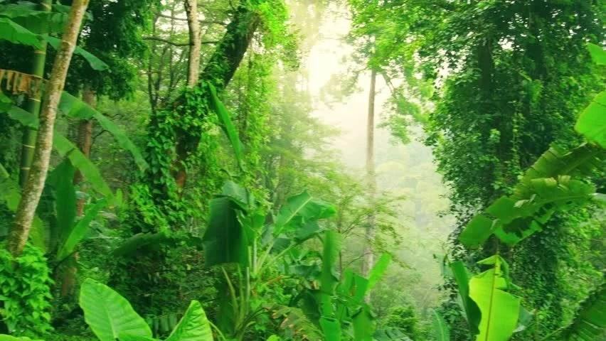 Natural Falls Wallpaper Free Download Evergreen Tropical Rainforest Scenic Landscape Background