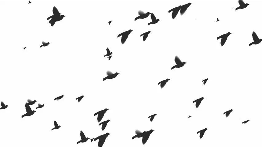 Silhouette of Flying Birds On Stock Footage Video (100%