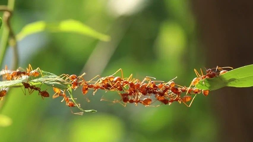 Ant Bridge Unity Team Concept Team Stock Footage Video