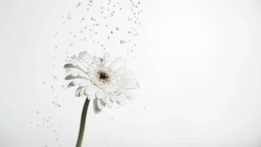 Falling In Reverse Wallpaper Apps Stock Video Of Studio Shot Of Water Drops Falling