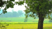 Plants for Natural Background, Nature Stock Footage Video ...