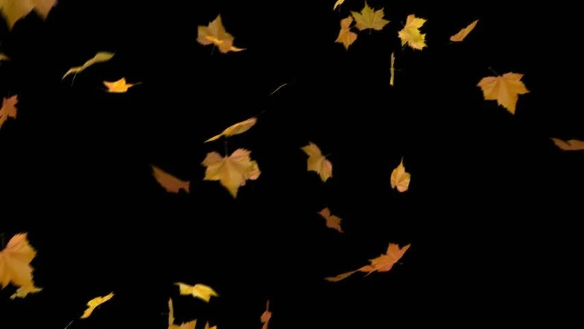 Free Animated Falling Leaves Wallpaper Falling Leaves Alpha Masked And Looped Cg Animation