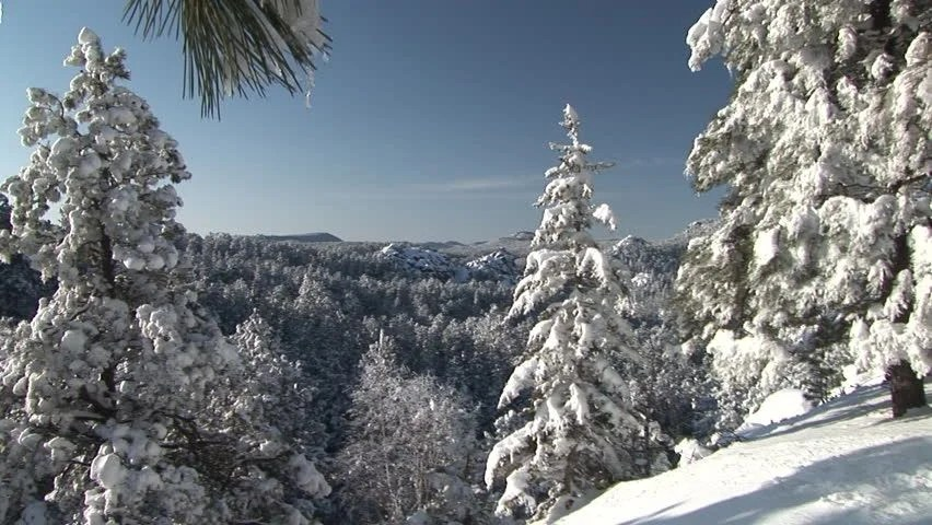 Images Of Snow Falling Wallpaper Trees In The Black Hills Forest In The Black Hills South