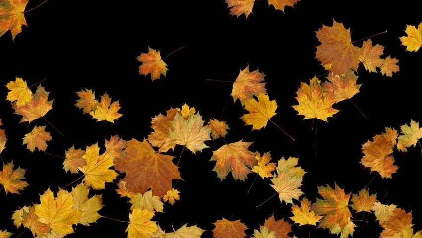 Fall Leaves Clip Art Wallpaper Orange Autumn Leaves Fall To The Ground Soft And Subtle