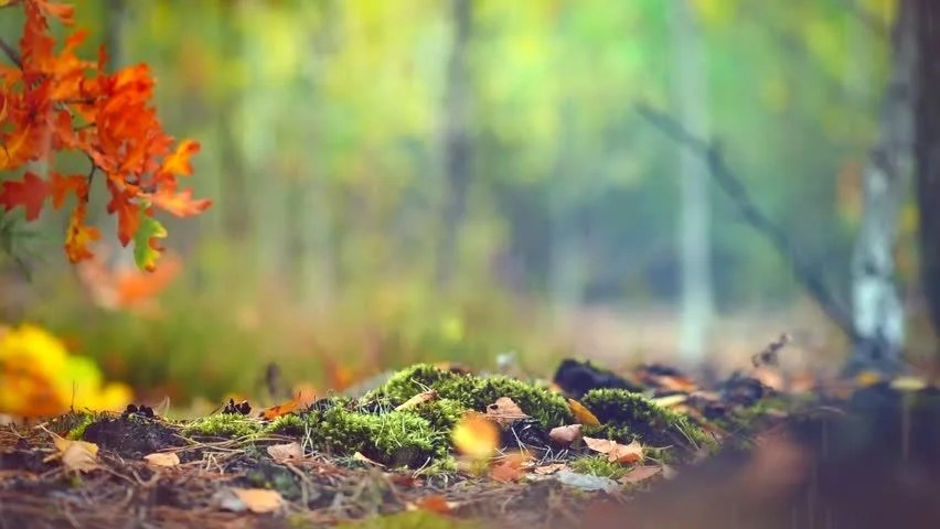 Fall Wooded Wallpaper Autumn Sunny Forest Background Park Beautiful Scene