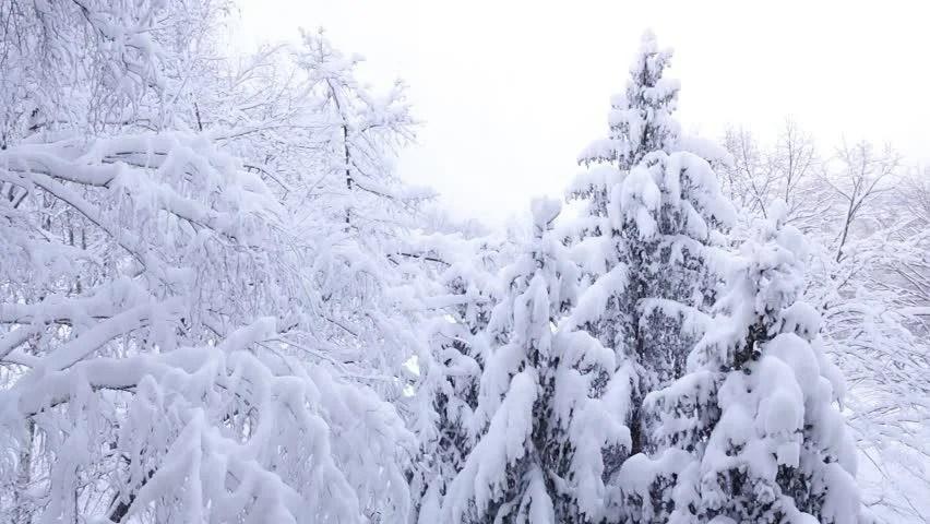 Snow Falling from Tree in 庫存影片視頻(100% 免版稅)23601997 | Shutterstock