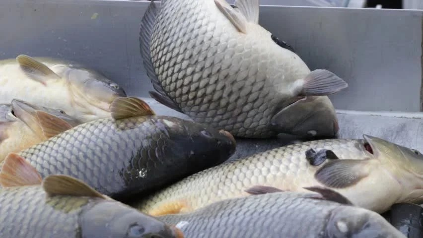 What Is Cold Water Fish To Eat