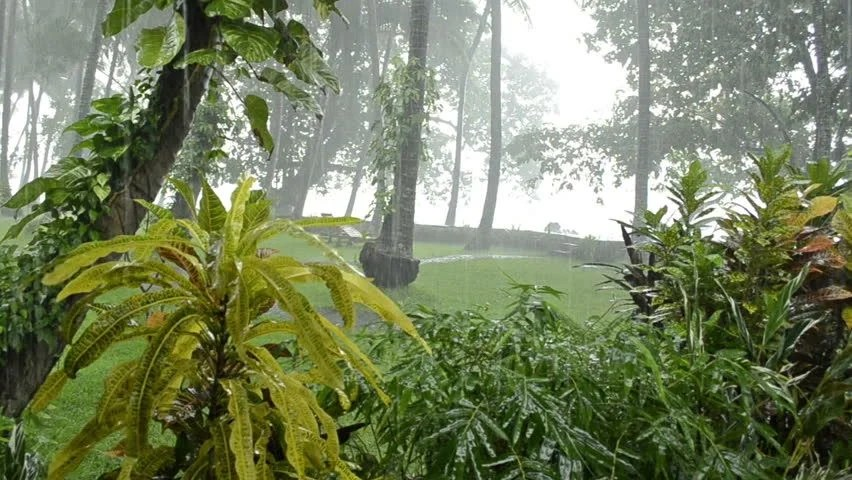 Falling Water Wallpaper Hd Stock Video Clip Of Heavy Rain In Tropical Forest Rainy