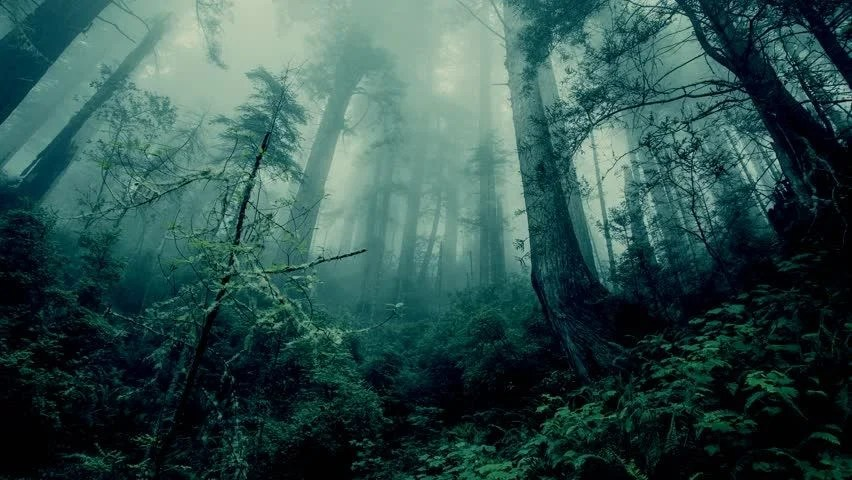 Hd Standard Wallpaper Fantasy Forest Pan Stock Footage Video 100 Royalty Free