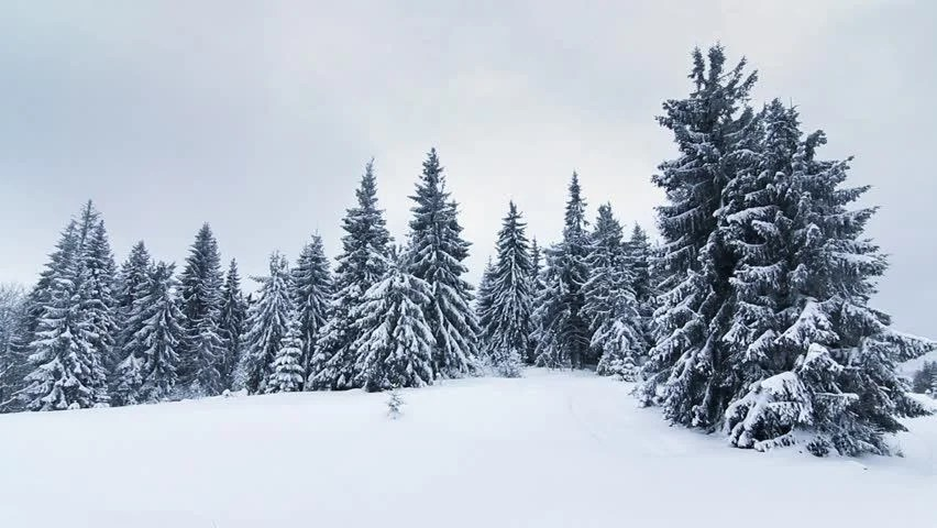Falling Snow Wallpaper Widescreen Ethereal Winter Forest In Falling Snow With Snow Laden