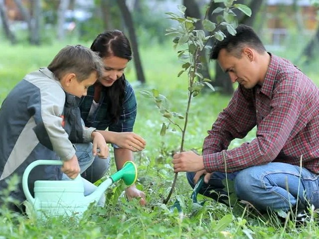 Image result for family planting trees