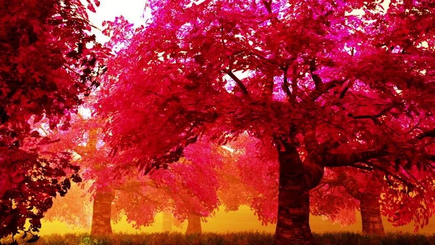 Falling Cherry Blossoms Wallpaper Falling Cherry Blossoms Animation Stock Footage Video