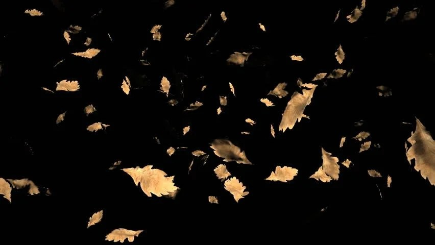 Autumn Falling Leaves Live Wallpaper 3d Video Render Of Stock Footage Video 100 Royalty Free