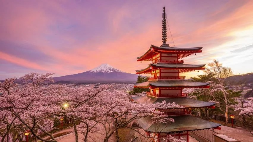Falling Cherry Blossoms Wallpaper Sakura Stock Video Footage 4k And Hd Video Clips