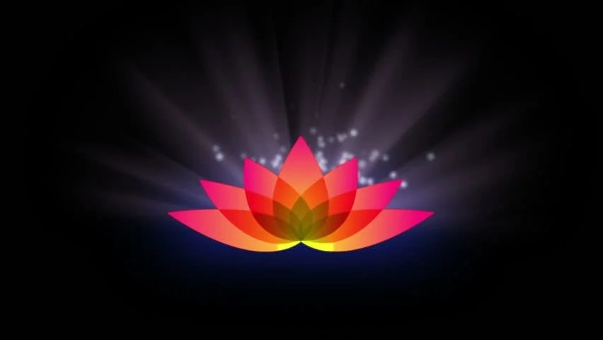Single Flower Hd Wallpaper Lotus Flower With Motion Light Stock Footage Video 100